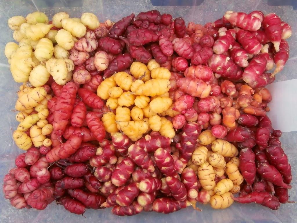 edible tubers vegetables - 640×640