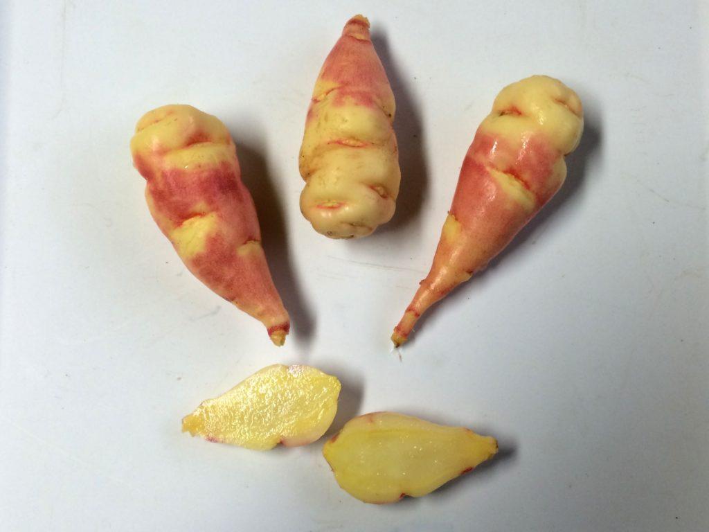 mashua-Orange-tuber-exterior