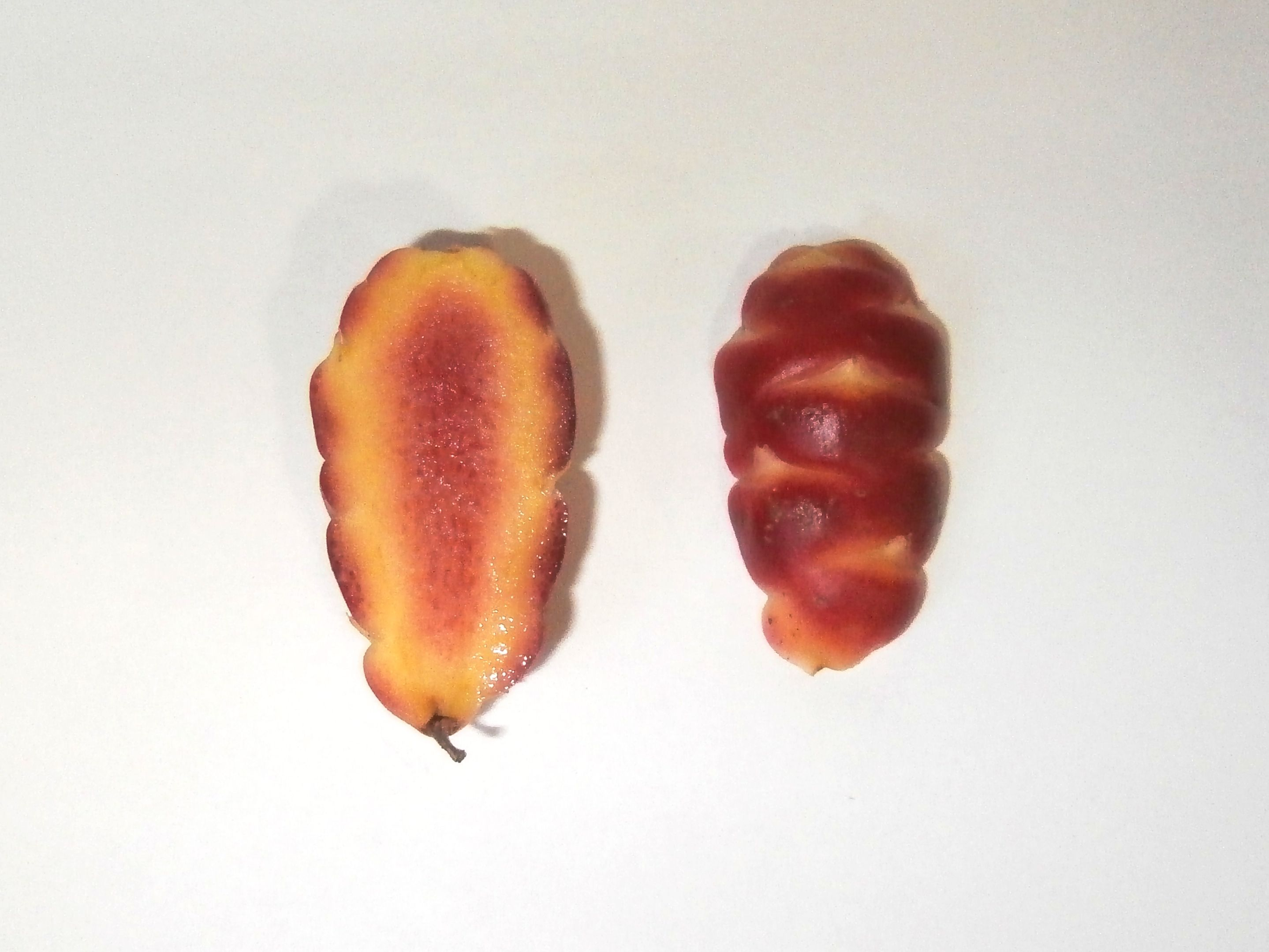 Bolivian Red oca tuber interior
