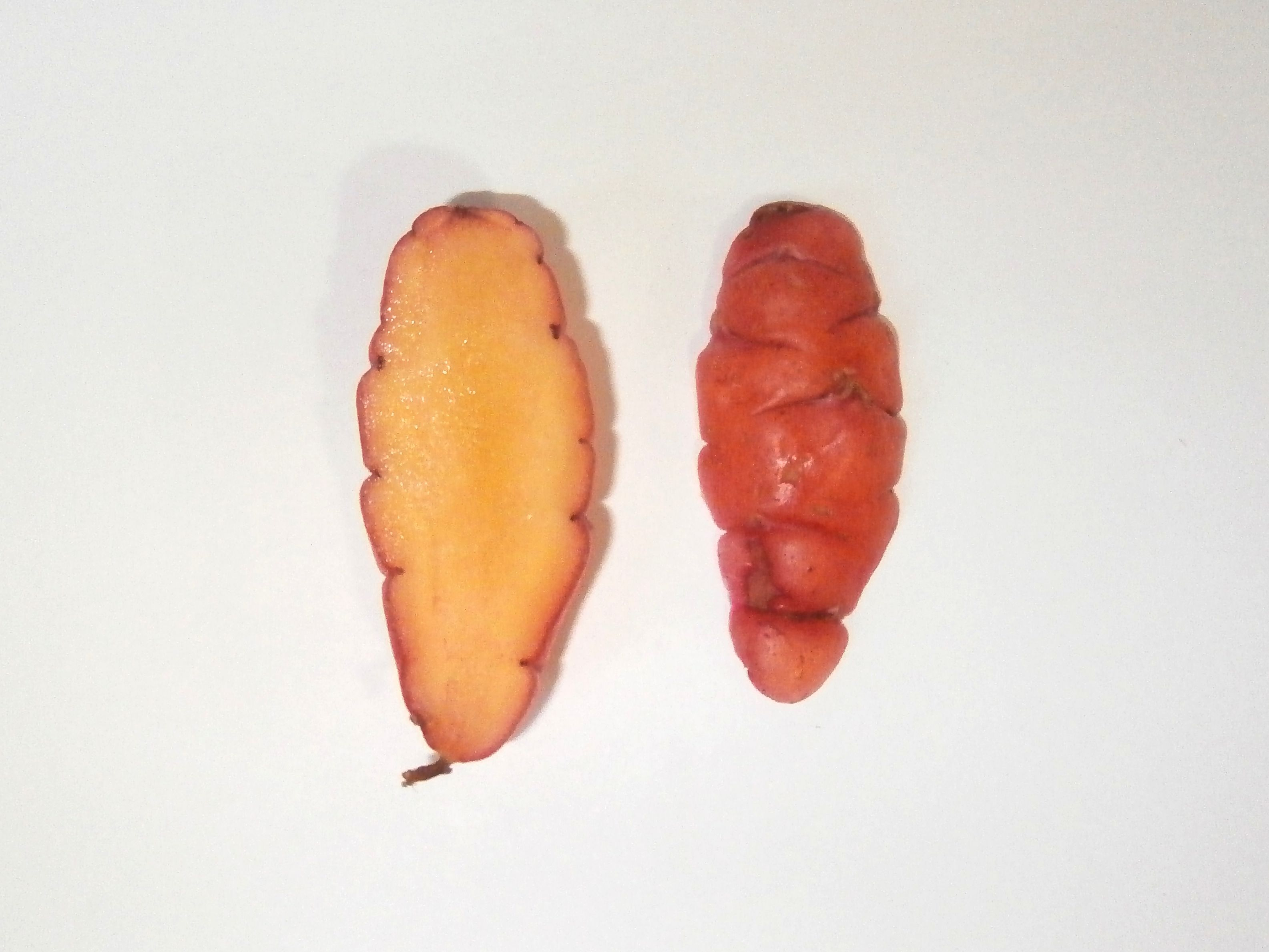 Sunset oca tuber interior