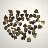 Mashua Seeds