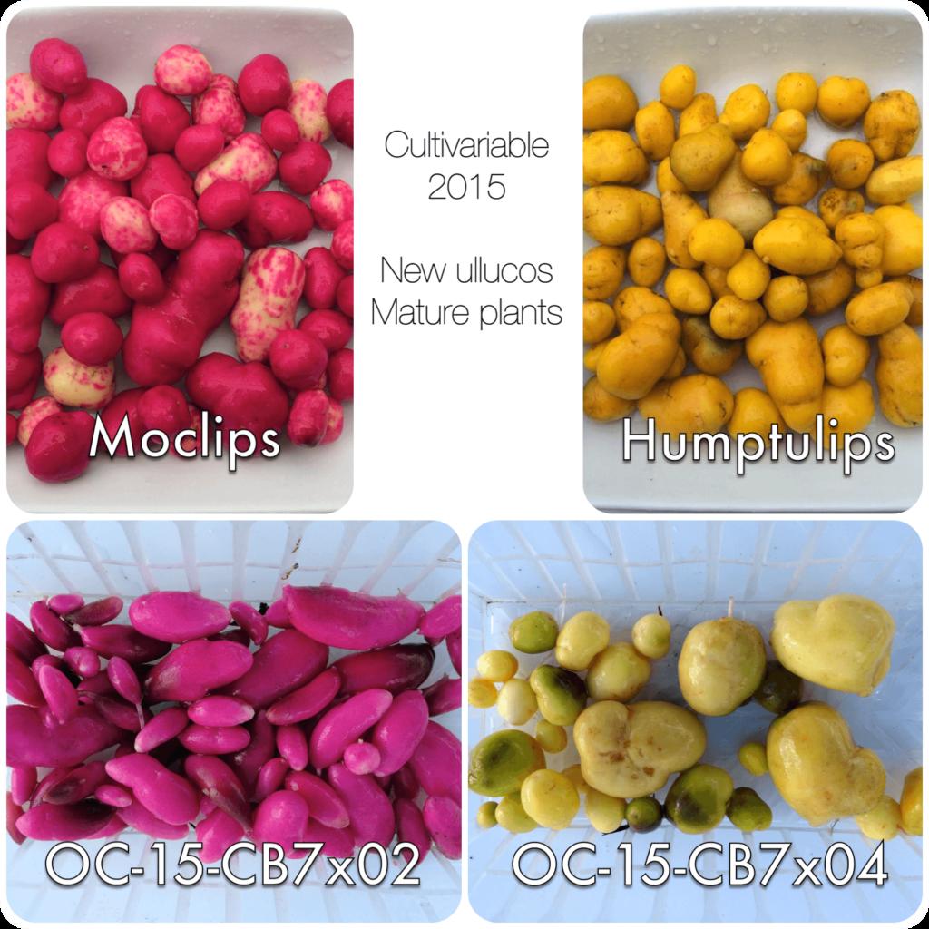 2015-full-ullucos
