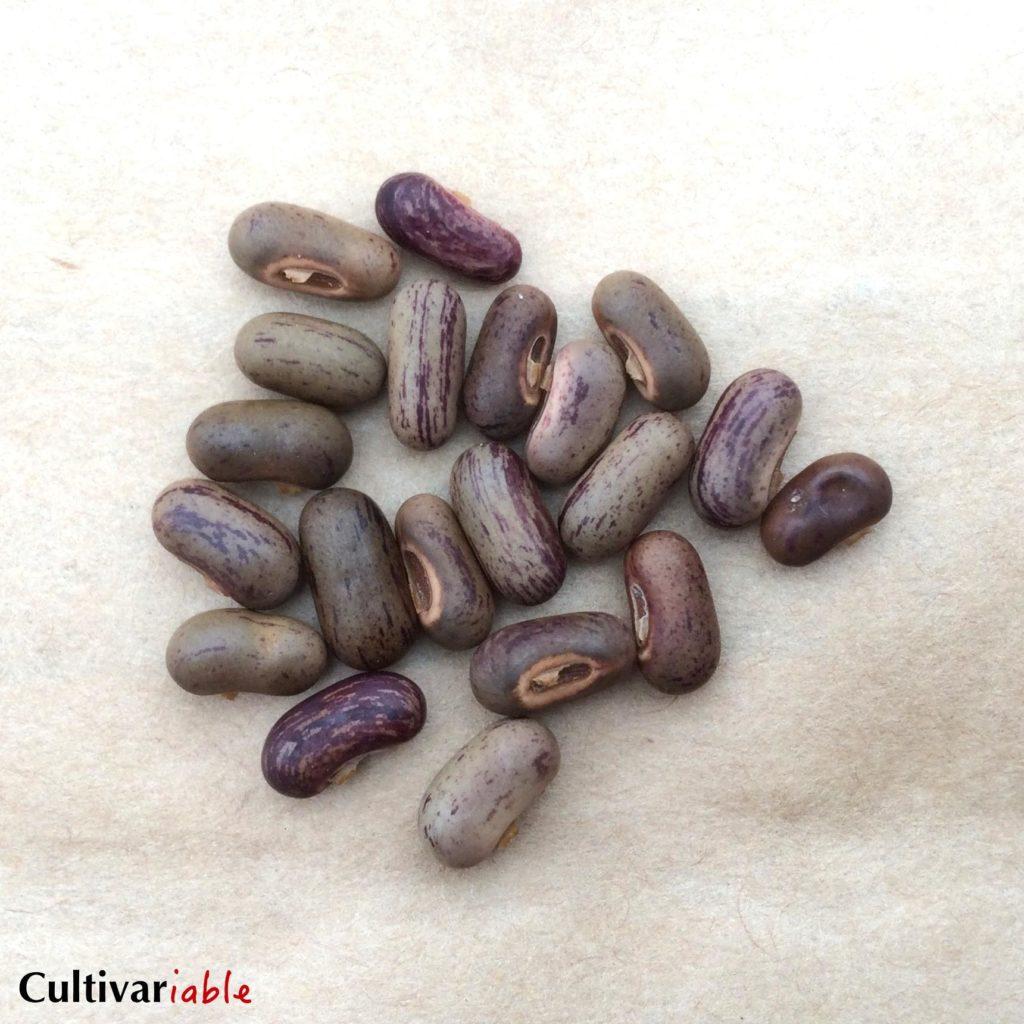 apriceana-seeds