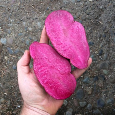 A large tuber of Loowit is cut in half, exposing deep red flesh