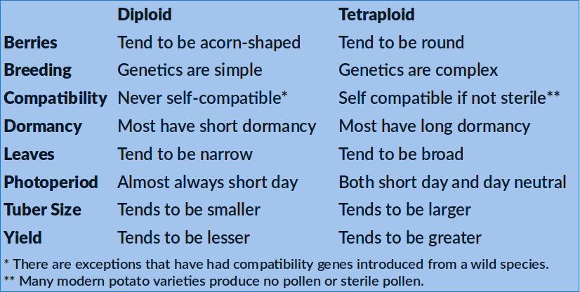 A table showing traits characteristic of diploid and tetraploid potatoes. This information is covered in the text.