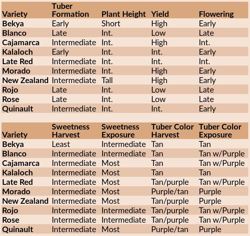 Comparisons of 10 yacon varieties