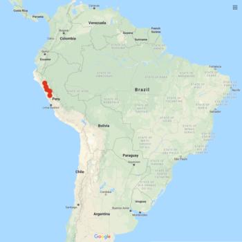 Solanum albicans distribution map