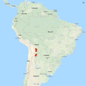 Solanum boliviense distribution map