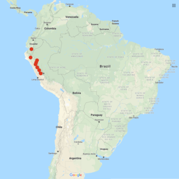 Solanum chomatophilum distribution map