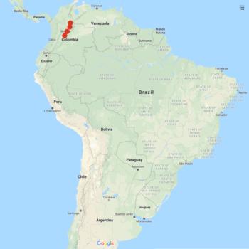 Solanum flahaultii distribution map