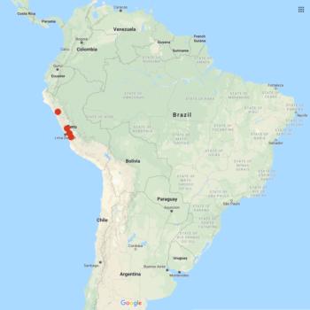 Solanum immite distribution map