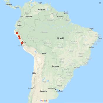 Solanum mochiquense distribution map