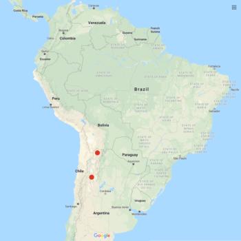 Solanum x aemulans distribution map