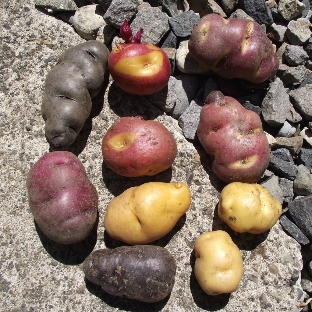Doug Strong potatoes