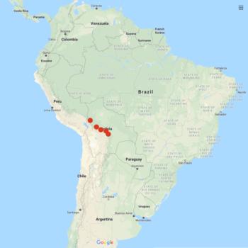 Solanum stipuloideum distribution map