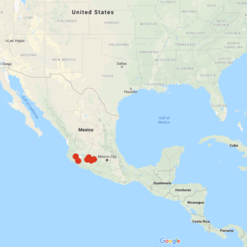 Solanum trifidum distribution map