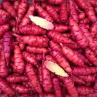 Tubers of the oca (Oxalis tuberosa) variety 'Cherry Red'