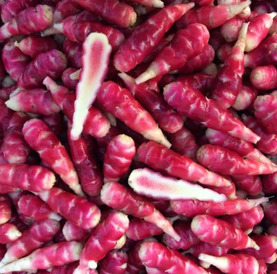 Tubers of the oca (Oxalis tuberosa) variety 'Hopin'