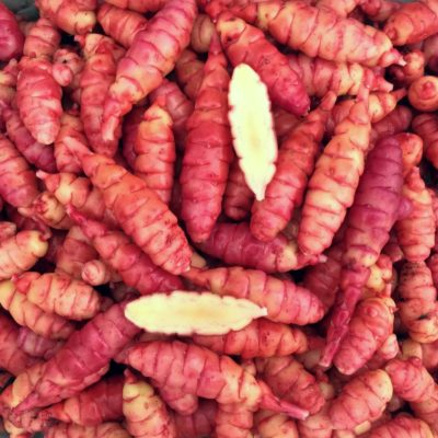 Tubers of the oca (Oxalis tuberosa) variety 'New Zealand Heirloom Red'