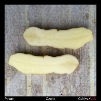 Potato variety 'Ozette' tuber flesh