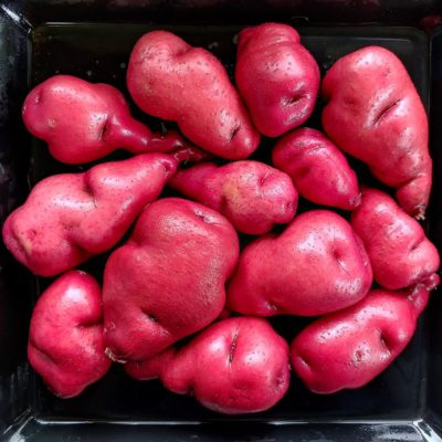Tubers of the Cultivariable original potato variety 'Gunter Red'